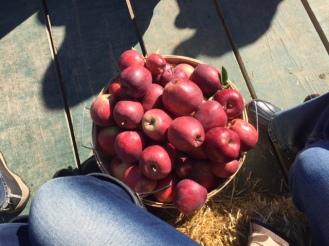 apple-picking3
