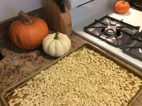 pumpkin-seeds1